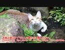 お庭でLet's hunting!!な猫。今日の獲物はトンボです。