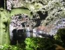【作業用】春ですね、桜の歌【BGM】
