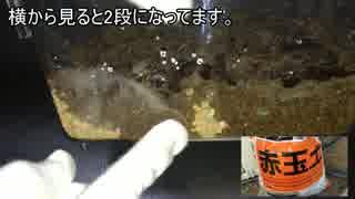 蟻戦争#43 養殖!ダンゴムシ編