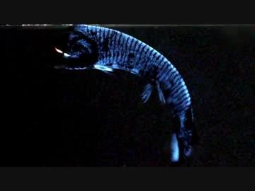深海発光生物の世界 (01 of 02)