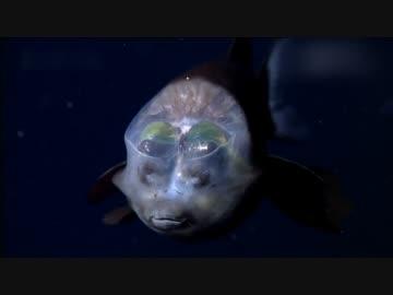 深海発光生物の世界 (02 of 02)
