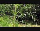 【自然音】 雫と虫の音② 【癒し系BGM】