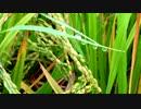雫と虫の音③ 【自然音】