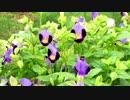 花と虫の音 【自然音】