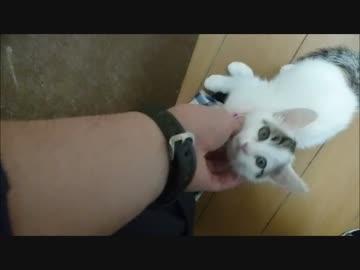 懸命に体調不良を訴える子猫