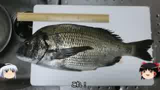 釣った黒鯛を「もろみ竜田揚げ」でいただ