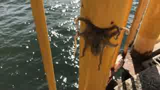 釣り動画ロマンを求めて 2釣目(磯子海づ