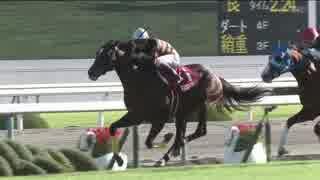 【競馬】2016年 京都大賞典 キタサンブラック【GII】