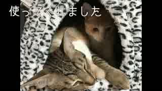 猫達初めての寝床を買ってきた!
