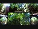 ステディカム VS 全天球 森の中をあるく