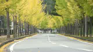 紅葉の京都(2016/11/6)