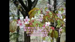 【第七回ボカロクラシカ音楽祭】早春賦