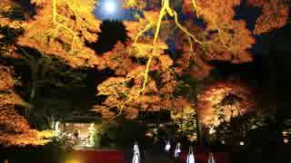 紅葉の京都(2016/11/13)