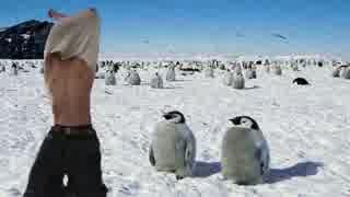 ペンギンに肉体美を見せようとして凍死す