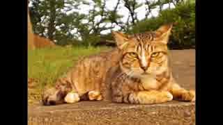 お散歩で出会ったネコ 7