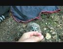 子フクロウをかわいがっている動画