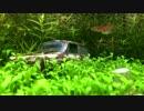 アクアジオラマ 1作目(1/2) ~プラモデルを水槽に沈めてみた
