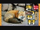 【もふもふ動画】宮城蔵王キツネ村に行ってきた【予告編】