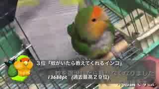 コザクラインコのジャック動画年間ベスト8【2017】
