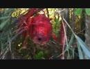 【グロ注意】 スズメバチの巣をタミヤカラーに塗装!? 【超危険】