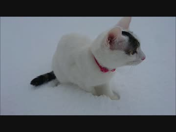 A cat who saw snow for the first time
