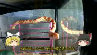 ウチの蛇さんがこんなに可愛いのは当たり