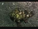 釣り動画ロマンを求めて 26釣目:後半(ふれーゆ裏:夜釣)