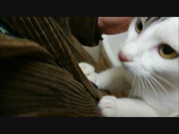 エンジン吹かして飼い主をあおる事を覚えてしまった猫