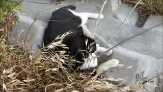 母猫をずっと撮影してたら子猫が寄ってきた
