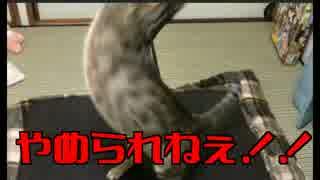 【猫の呪い】お風呂が溢れているのに猫で遊ぶことがやめられない病気