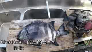【魚釣り】グレに届け!!【外道】
