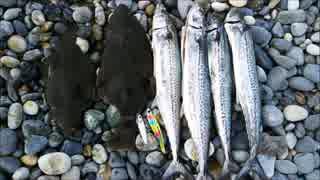 富山県 宮崎・境海岸(ヒスイ海岸)で魚釣り