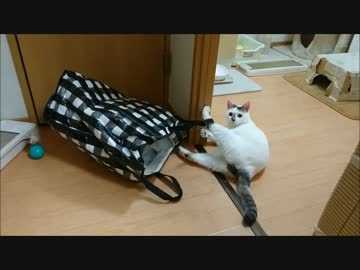 A cat that shows a brilliant escape play as well as a Hollywood star