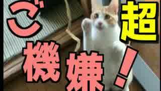 飼い主が帰ってきてハイテンションな猫達!