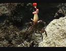 釣り動画ロマンを求めて 35釣目(若洲海浜公園)