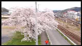 2016年04月08日 桜舞う中、廃校になった下里分校まで散歩がしたい Part1