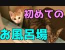 【初体験】生まれて初めてのお風呂場に子猫は…!?