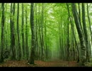 【けものフレンズ】アライさーんの森