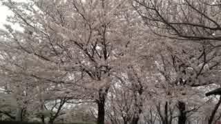 【生海月】なまくらじお【2017.4.5】