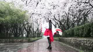 【桜と雨の中】千本桜踊ってみた【やよい】
