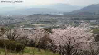【生海月】なまくらじお【2017.4.12】