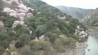 春の京都(2017/4/9)