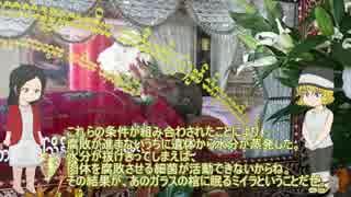 【ゆっくり解説】仏教のミイラを紹介【ミ