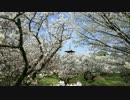 春の京都(2017/4/15)