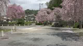春の京都(2017/4/16)