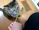 【拾い猫】ベジタリアン