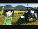 【京町セイカ車載】菜の花ツーリング【VMAX1700】