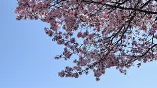 【ゆっくり】徒歩で日本一周part49【花巻→