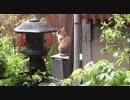 雨上がりの自宅警備員猫。あんよ濡れるから帰るにゃー。