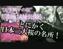 【信州マッピング】高遠城址公園でエクストリーム夜桜お花見じゃい!!